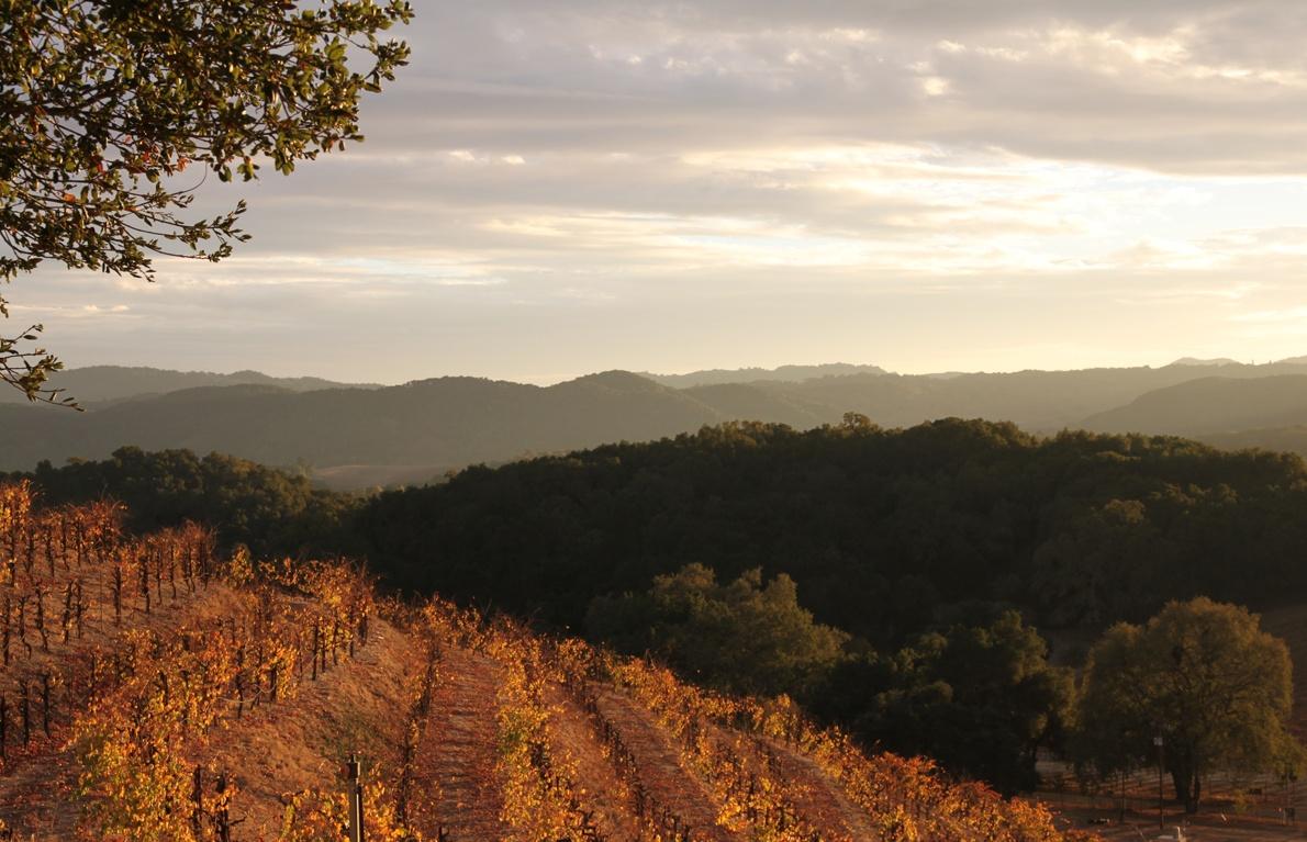 Saxum Vineyards, Paso Robles